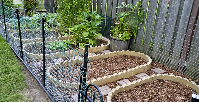 Our Vegetable Garden – Part 2