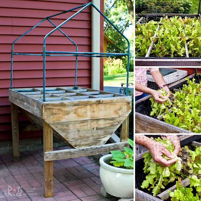 Tips and ideas for Planning Your Vegetable Garden - location, layout, feeding, pest control, and easy vegetables anyone can grow.   RotiNRice.com
